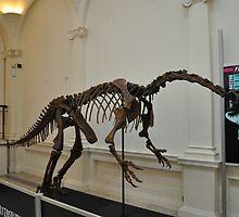 plateosaurus skeletal frame by pater54