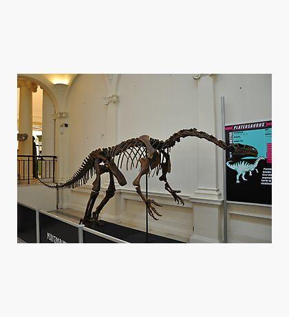 plateosaurus skeletal frame Photographic Print