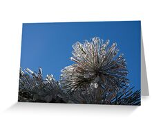 Ice Storm 2013 - Pine Needle Flower Greeting Card