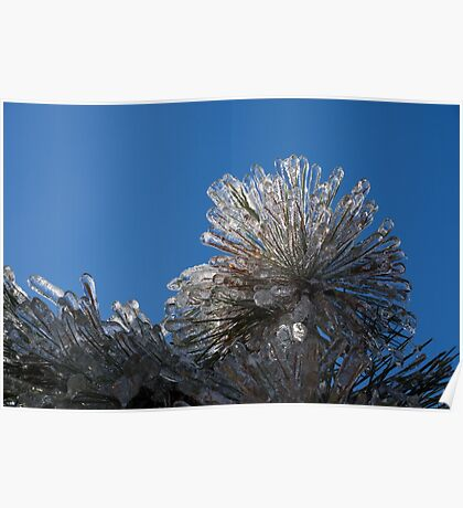 Spectacular Ice Storm - Pine Needle Flower Poster