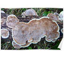 Flat Furry Fungis... Poster