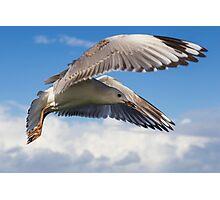Gull's Flight - Lennox Head Photographic Print