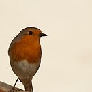 Robin by Lennox George