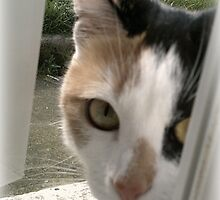 Miss Nosey by vic321