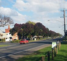 Autumn's flush of colour, the claret ashes line the roadway by Margaret Morgan (Watkins)