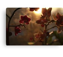 Nature of Daylight Canvas Print