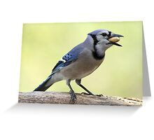 A Satisfied Blue Jay Greeting Card