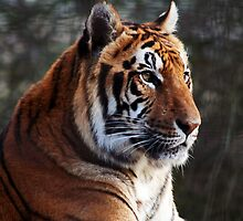 The Tyger by LuPru