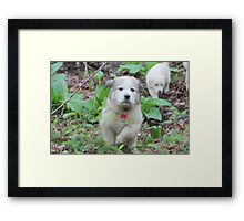 Yahooo This Place Is Great - Goliath Framed Print