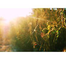 catch the sun 2 Photographic Print