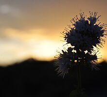 Flower Of The Sun by LlandellaCauser