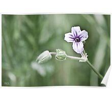 Tiny Purple Wildflower Poster