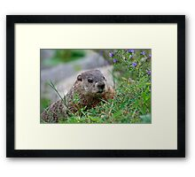 I Celebrate Earth Day, every day Framed Print
