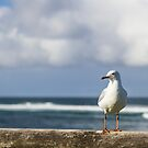 Gull's Fence by Daniel Rankmore