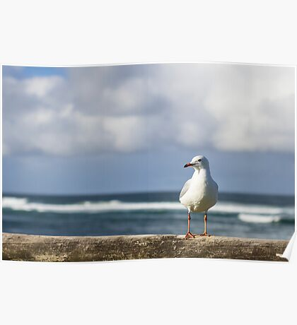 Gull's Fence Poster