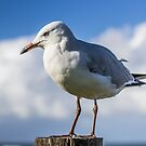 The Gull Post by Daniel Rankmore