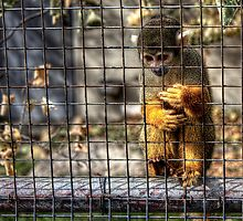 Caged Monkey by Bendinglife