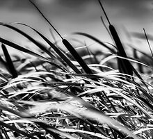 Cat Tails Black and White by Bendinglife