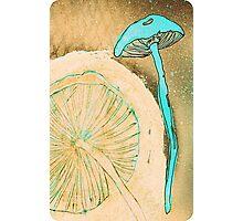 Blue Mushrooms Photographic Print