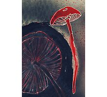 Mushrooms Photographic Print