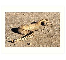 Great Basin Rattle Snake Art Print