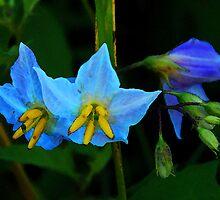 Blue Nettle Flowers by cchandler