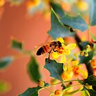 Busy Bee by Janette  Kimbrough