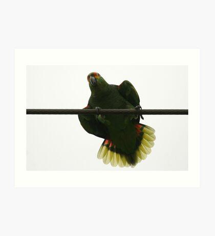 Wild Parrot Live Wire Art Print