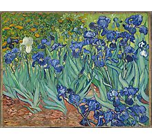 Irises by Vincent van Gogh Photographic Print