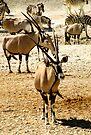 Oryx and Zebra by Carole-Anne