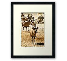 Oryx and Zebra Framed Print