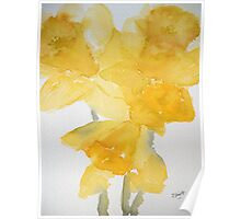 Awash with Daffs Poster