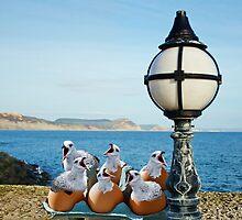 Free-Range Gulls :) by Susie Peek