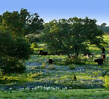 Grazing amongst wildflowers by Charmiene Maxwell-batten