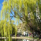 Spring willow trees by Maria1606