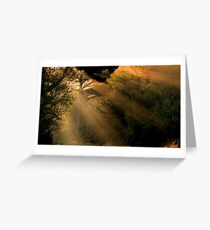 Sunrays Greeting Card