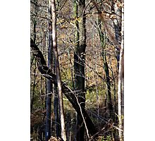Trees Tall and Valley Photographic Print