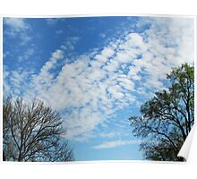 Trees Framing the Sky Poster