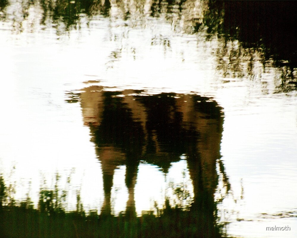 Moo - Reflection of Nature by melmoth