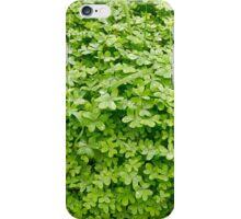 Fresh green clover. iPhone Case/Skin