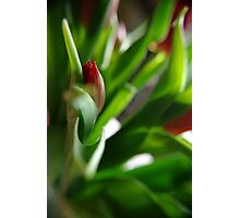 The Wonder of Spring Photographic Print