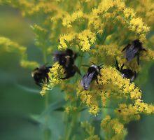 Bees by MikkoEevert