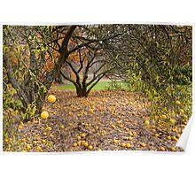 Autumn's Fruit Poster