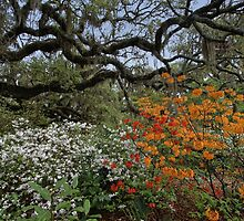 Brookgreen Gardens - Oaks and Flowers by photosan