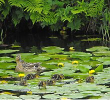 Baby Ducks Easter Treat  Photographic Print