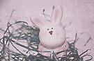 A Nosy Bunny by Denise Abé