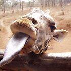 Giraffe Tongue by Adam Wilson