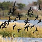 Green Winged Teals by Dennis Cheeseman