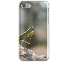 Praying mantis. iPhone Case/Skin