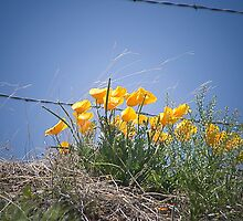 Spring Popping Up by David DeWitt